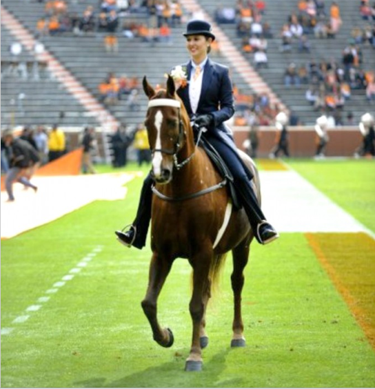 "2012 - UNIVERSITY OF TENNESSEE Homecoming - Kimbrell Hines Up On ""A Daring Affair"" - Taking The Place Of 'Big Lick' World Grand Champion Walk Time Charlie"