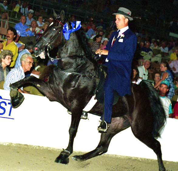 "STEVE SMITH UP ON ""MISS WALKING MIRACLE"" AT THE TENNESSEE WALKING HORSE NATIONAL CELEBRATION"