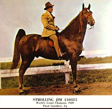 STROLLING JIM, 1939 WORLD GRAND CHAMPION