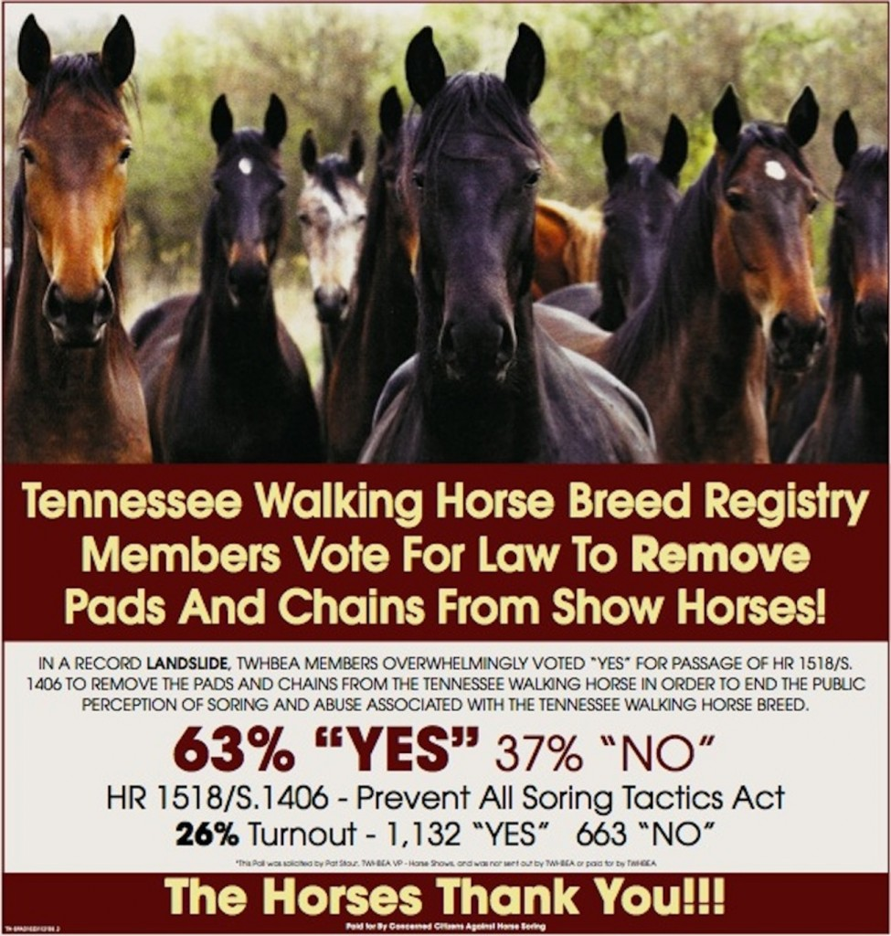 Big Lick Power Grab Tries To Destroy The Tennessee Walking Horse Breeders Exhibitors Association Will The Twhbea Sound Horse Directors Manage To Beat Back The Big Lick Power Grab