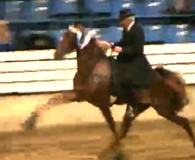TRAINER BOYZ 1ST VP - BILL CANTRELL - BAD IMAGE HORSE WITH BLUE RIBBON