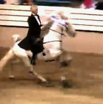 "THIS BE HIM - ""IM PUSHIN N LINE"" - JANICE FOSTEK UP  - AMATEUR 15.2 & UNDER STALLION SPECIALTY"