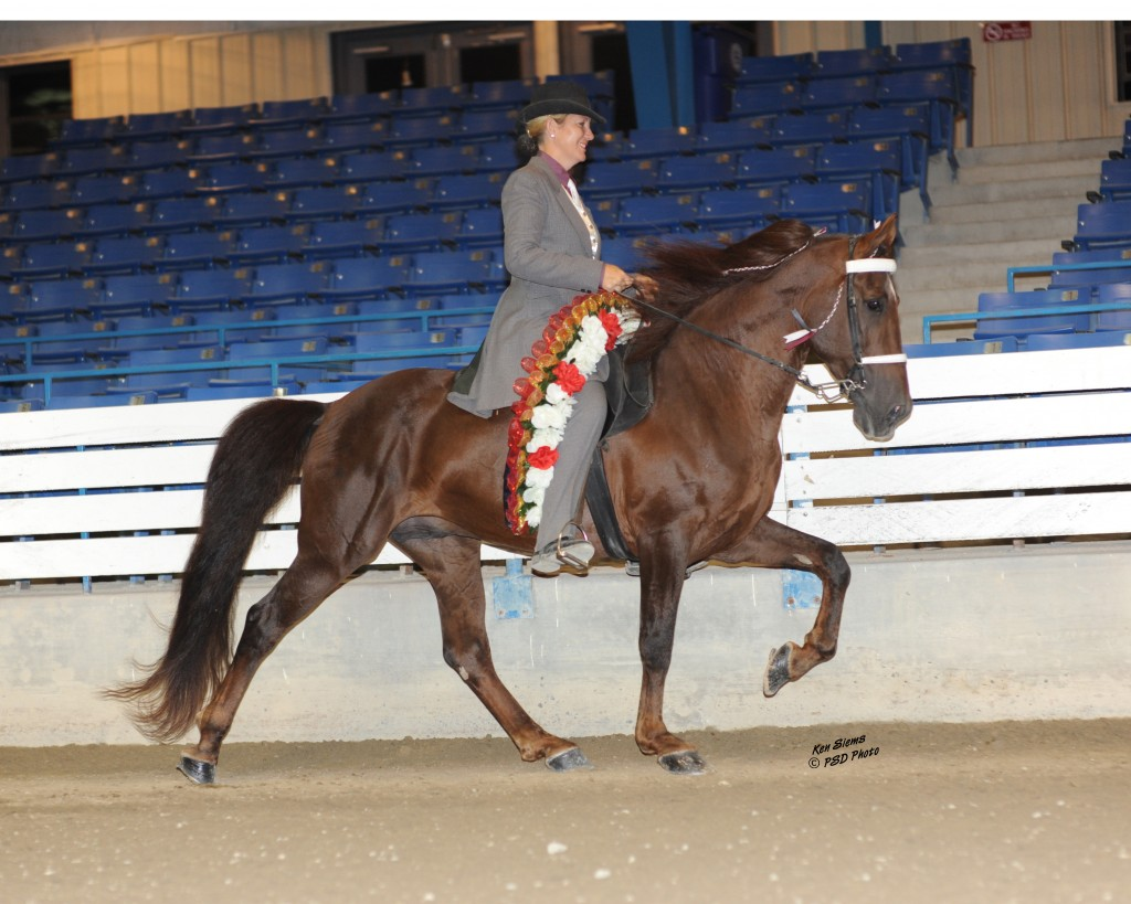 ALLEN ALL ROUND WITH MIKAL SPOONER UP, NATURAL SOUND TENNESSEE WALKING HORSE