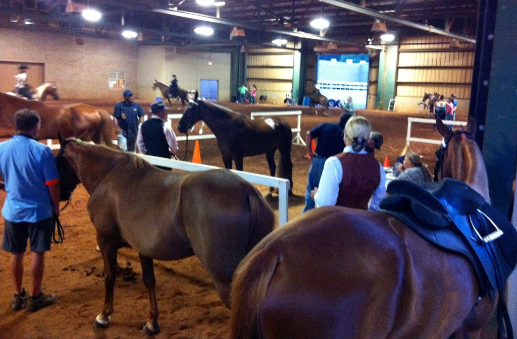 HORSES LINED UP FOR INSPECTION