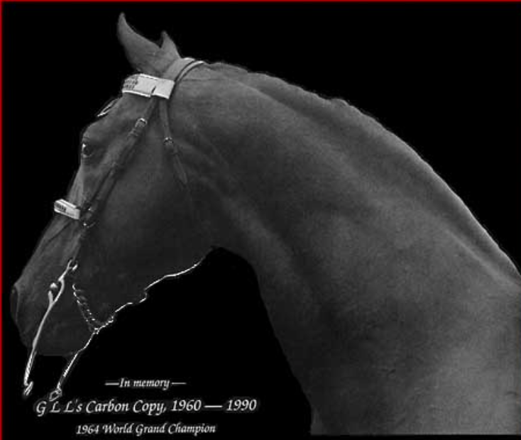 1964 WORLD GRAND CHAMPION PERFECTION'S CARBON COPY