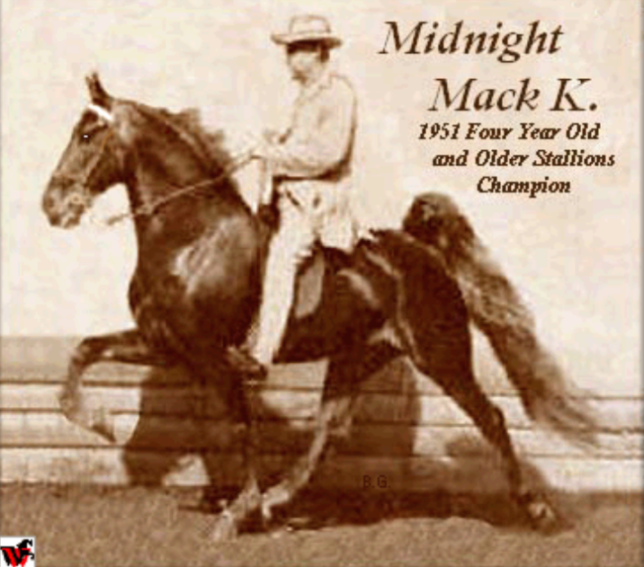 MIDNIGHT MACK K - THE BEST HORSE TO NEVER BE WORLD GRAND CHAMPION - JACK SLAYDEN UP