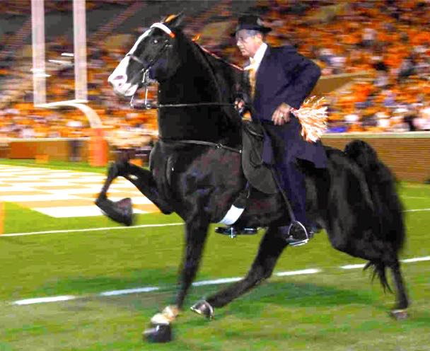 """JIMMY MCCONNELL UP ON """"WATCH IT NOW"""" AT UT HOMECOMING FOOTBALL GAME."""