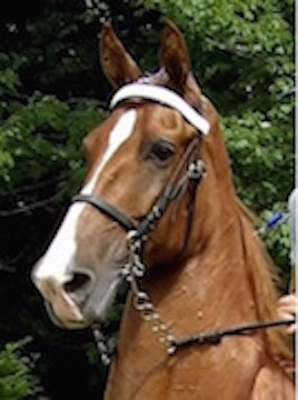 GEN'S ICE GLIMMER, FOALED AUG. 20, 2004 - SAVED FROM BIG LICK ANIMAL CRUELTY ON JULY 28, 2015