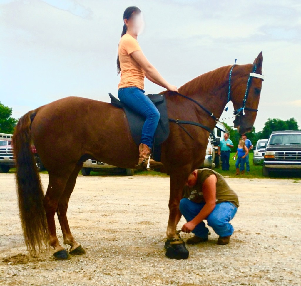 GEN'S ICE GLIMMER IN PARK LOT AT WILSON HORSE & MULE AUCTION IN COOKEVILLE, TENNESSEE ON JULY 28, 2015
