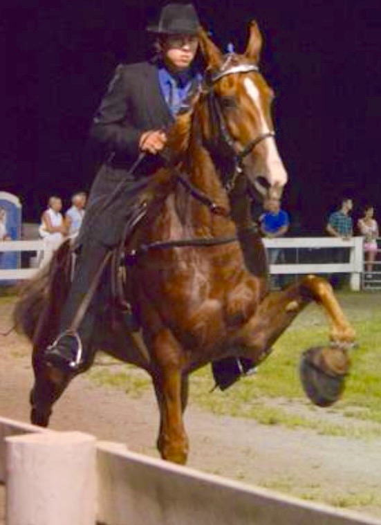 """GEN'S ICE GLIMMER"" AT LONDON, KENTUCKY HORSE SHOW ON JULY 18, 2015"