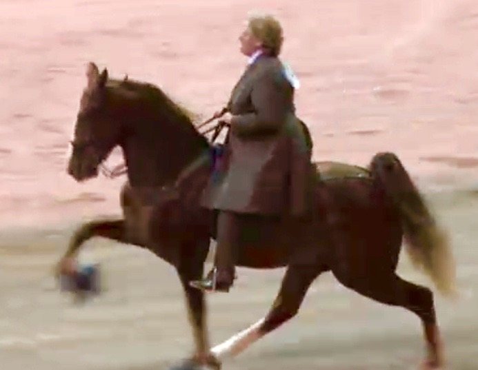 "MS. MARTHA ""SISTER"" BLACKMON-MILLIGAN EXHIBITING ""BIG LICK"" TWH AT TRAINER BOYZ SHOW"