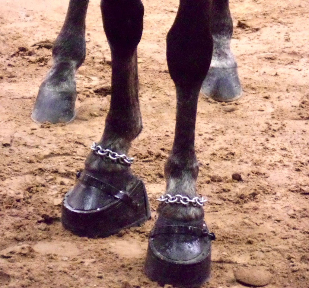 CHAINS (ACTION DEVICES) - BANNED BY USEF (UNITED STATES EQUESTRIAN FEDERATION) IN EQUESTRIAN COMPETITION