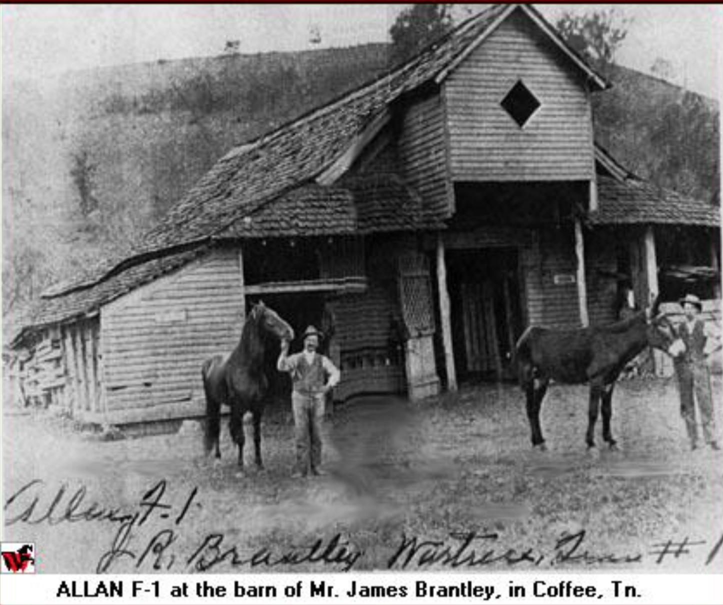 ALLAN F-1 - Founding sire of Tennessee Walking Horse Breed, 1896 - 1910.