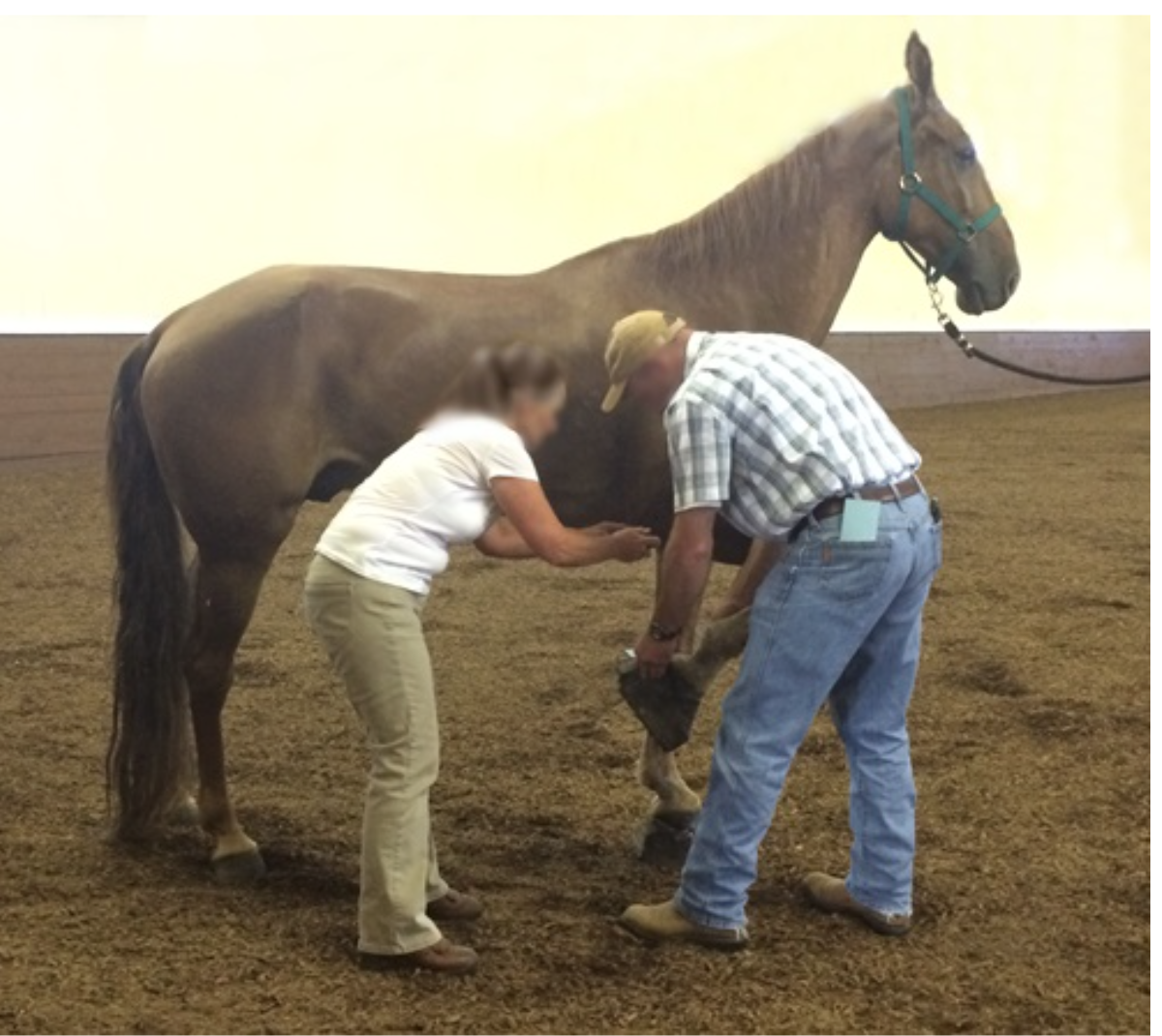 USDA VET EXAMINES GLIMMER - JULY 31, 2015 - USDA VIDEOGRAPHER DOCUMENTS CONDITION OF GLIMMER'S FRONT FEET