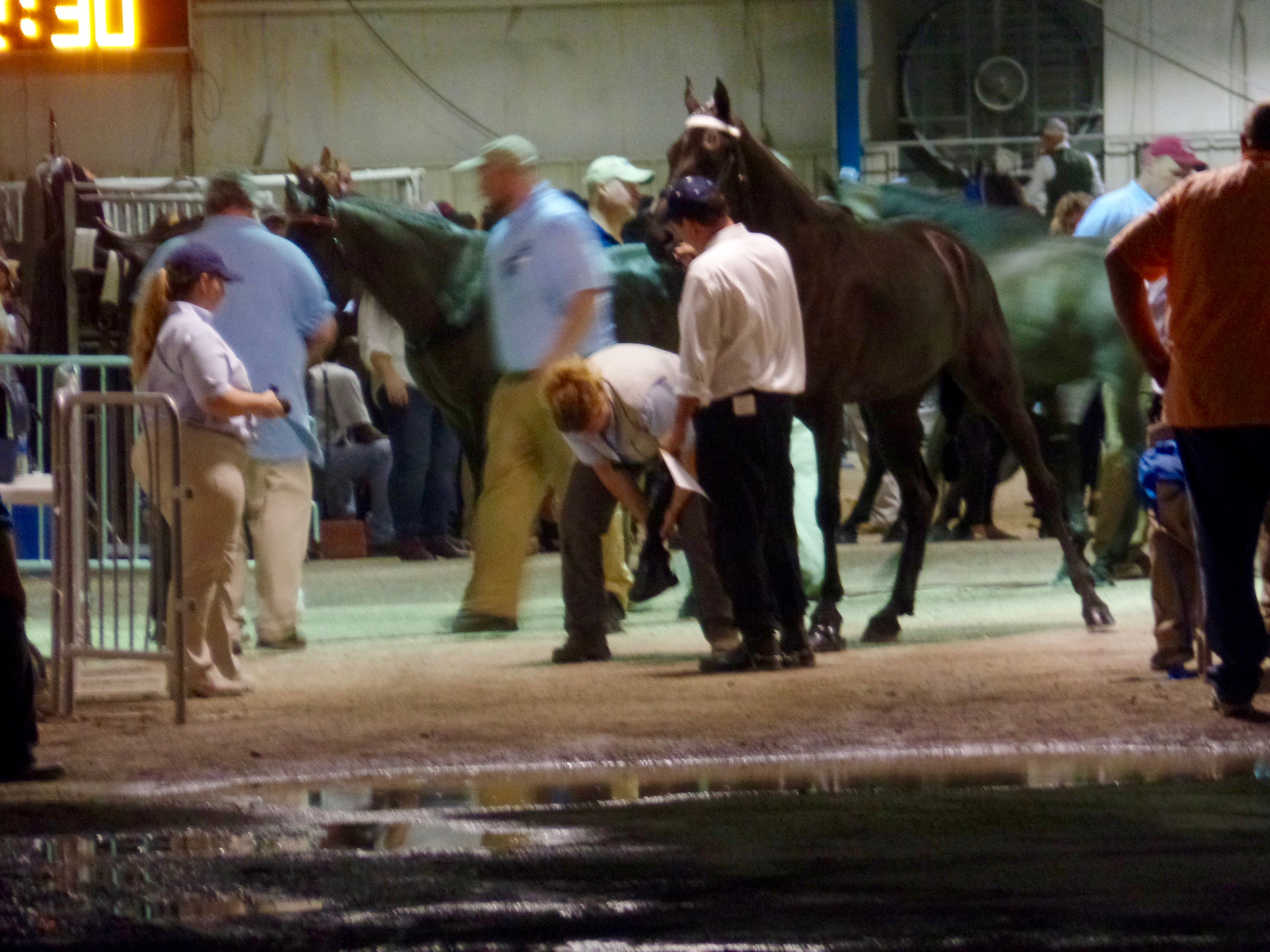 USDA Inspection - Friday, August 26, 2016 - TN Walking Horse National Celebration